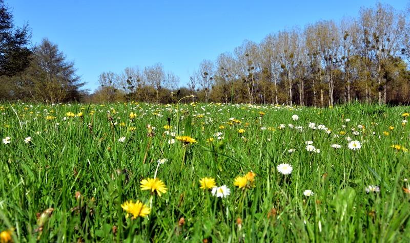 Vu de mon museau. Nature d'Avril en Nivernais.