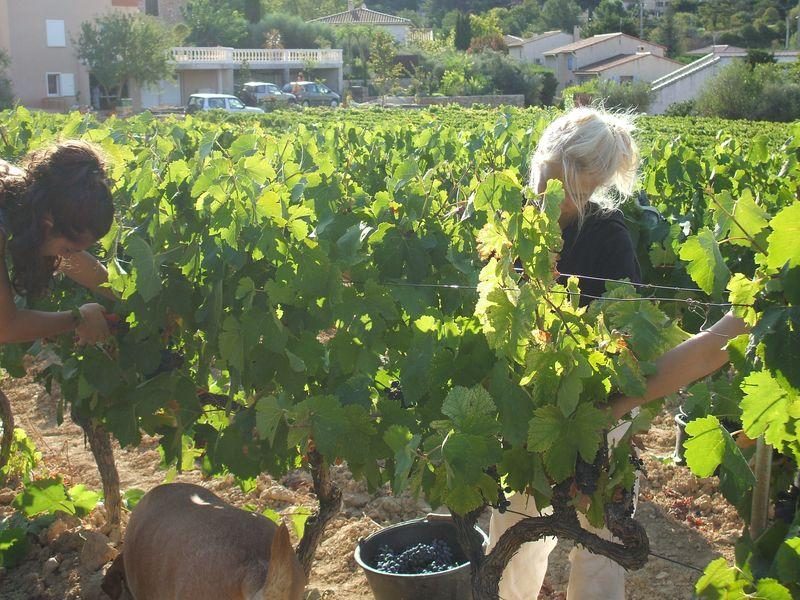 """Belles """"aux vignes"""". Le vin sera bon!"""