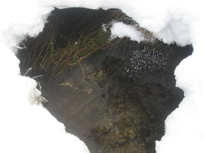 tourbière sous neige et glace