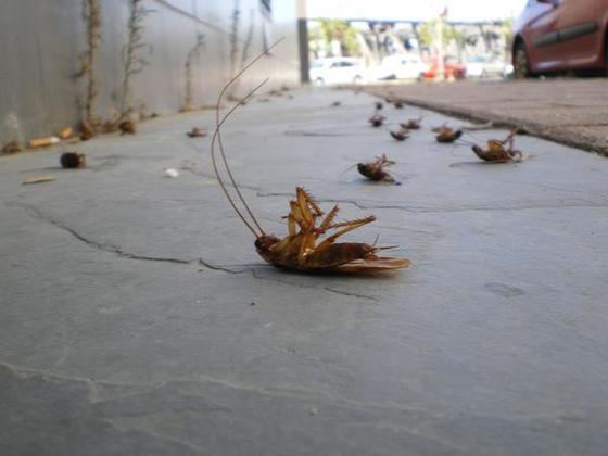 invasion de cafards dans mon quartier