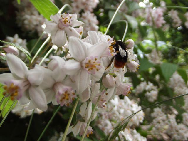 les abeilles font le printemps