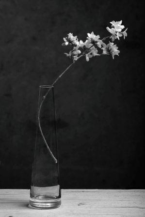 Ikebana..ou presque
