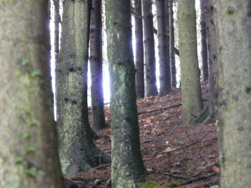 Histoire d'arbres...