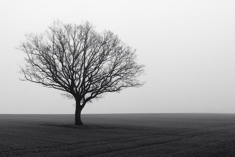 Autoportrait par temps de brouillard