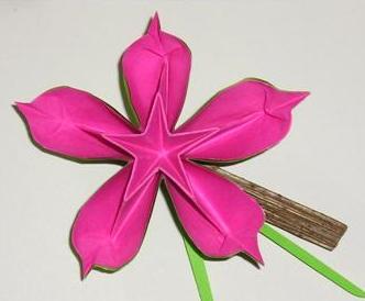 Une fleur au coeur d'étoile
