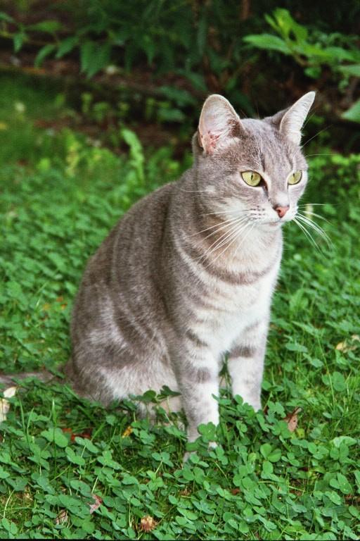 Quoi de plus beau qu'un chat?