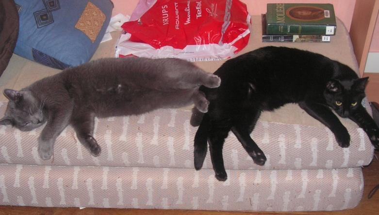 Mes bébés - Golden et Saphir