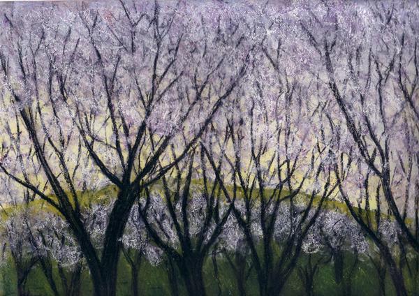 Le printemps 2. Cerisiers en fleurs. Horizontal.