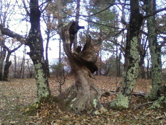 Les Roots font la fête : La Brune