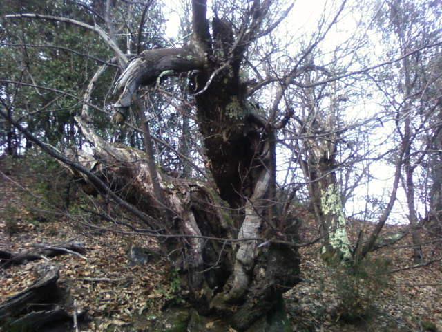 Les Roots font la fête : L'alien